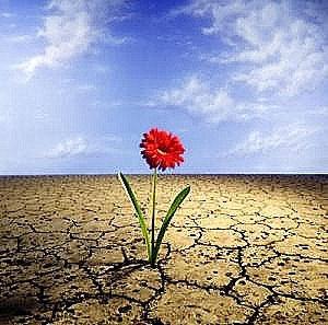 resiliência - flor no deserto