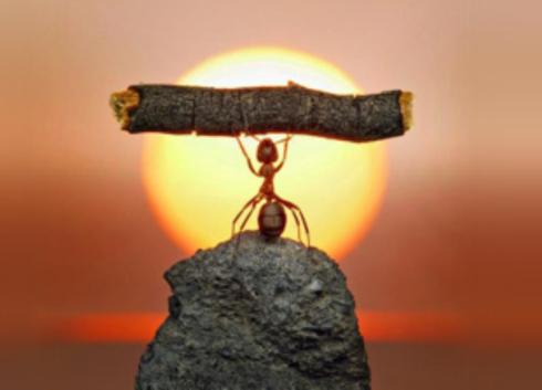 resiliência na infância - formiga levantando peso